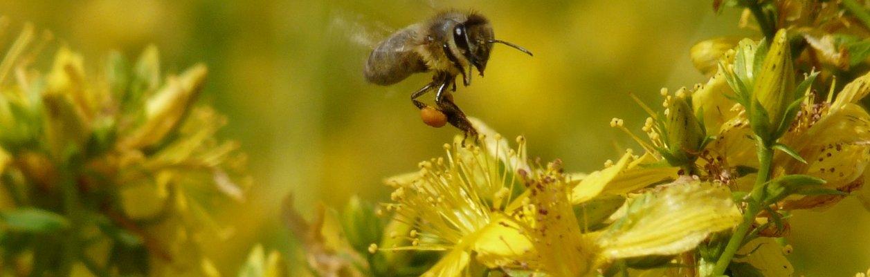 Cueillette, culture, apiculture...